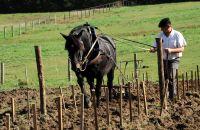Perfectionnement à la Traction équine en viticulture